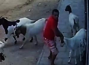 201711280227420000007704 300x219 - VEJA VÍDEO: Câmera flagra homem roubando bodes em cidade paraibana