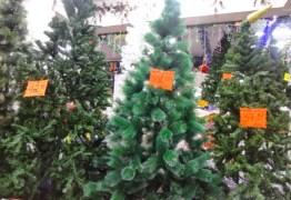 Procon- PB aponta variação de R$ 15 a R$699 no preço da árvore de natal