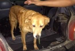 Idoso é preso suspeito de abusar sexualmente de cadela