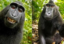 Macaco que tirou selfie é nomeado 'personalidade do ano' por ONG