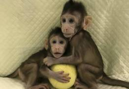 Cientistas chineses conseguem clonar primatas pela primeira vez na história