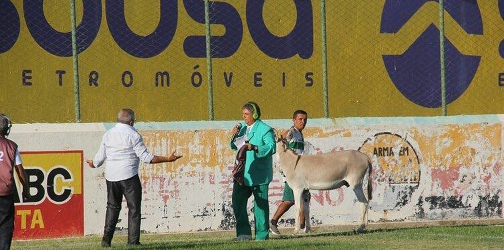 torcedor do sousa   jumento - Time do Sousa pode ser punido por permitir entrada de jumento em estádio
