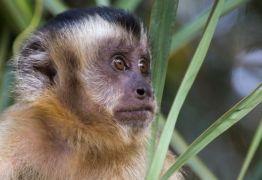 Massacre a primatas é tiro no pé contra febre amarela, diz pesquisador
