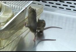 Injeção contra câncer elimina tumores em ratos