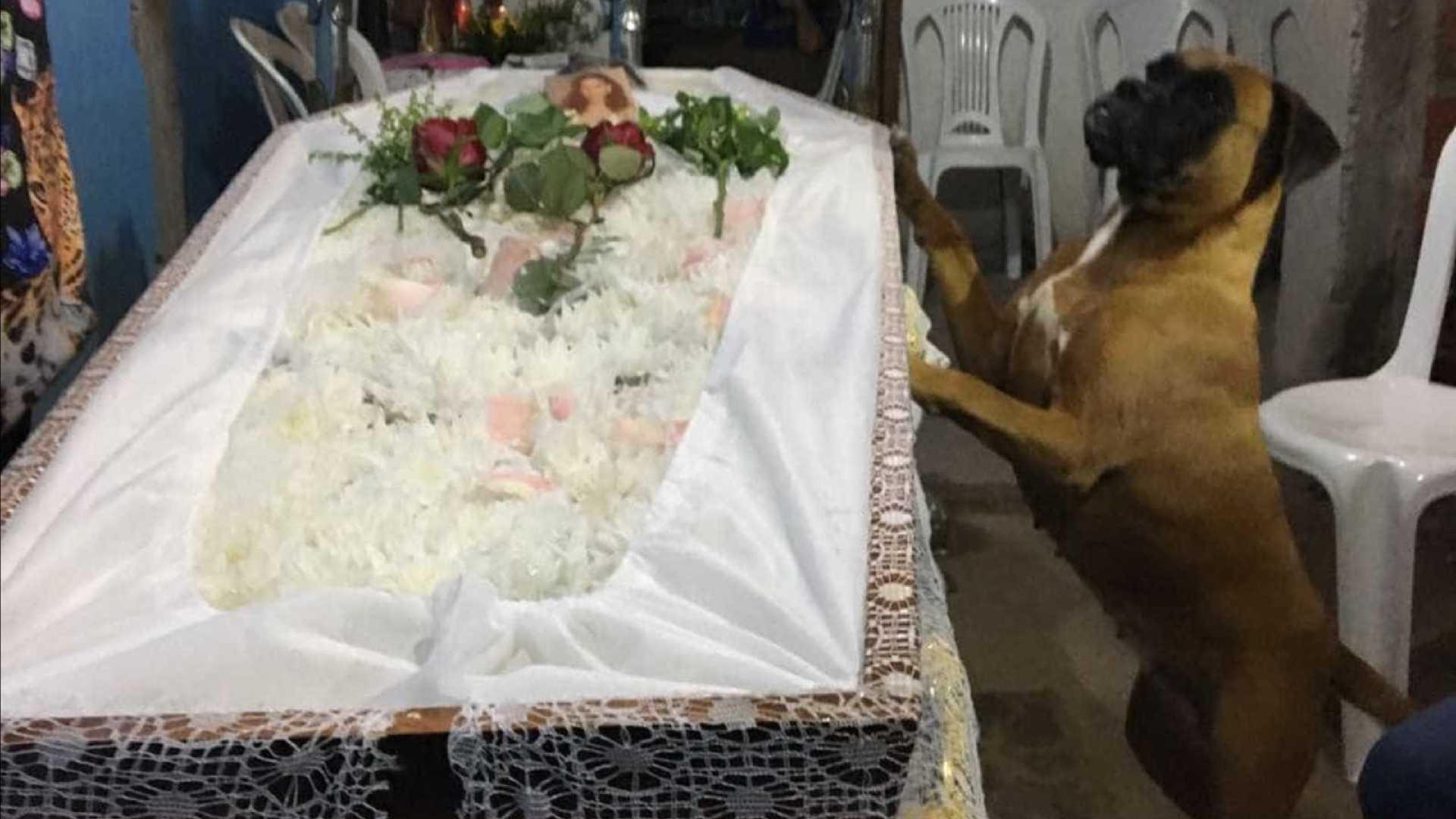 naom 5a831e68a081a - Cachorro impressiona familiares ao velar corpo da dona