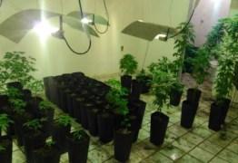 Polícia encontra plantação com 200 pés de maconha dentro de uma casa em Santa Rita