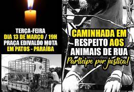Protetores dos Animais realizam manifesto em Patos próxima terça-feira