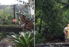 Árvore de 3 toneladas cai sobre carro e idosa sai ilesa: 'Nasci de novo'