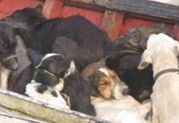 VIOLÊNCIA: Prefeito pega 20 anos de prisão por mandar matar 400 cachorros de rua