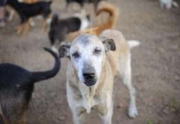 Código de Direito e Bem-Estar Animal é aprovado na ALPB