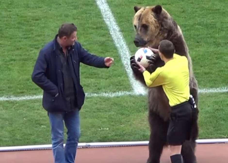 urso - VEJA VÍDEO: Urso chama atenção em jogo na Rússia e pode participar da Copa