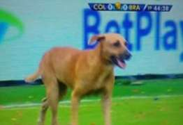 Rússia se livra de cães de rua antes da Copa