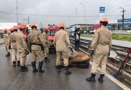 SUSTO: Cavalo fica preso em canteiro da BR-230 e é resgatado por bombeiros em Bayeux