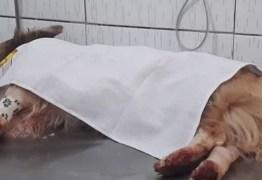 COVARDIA: Homem mata cachorro com golpes de foice no pescoço na frente da dona do animal no Sertão da PB