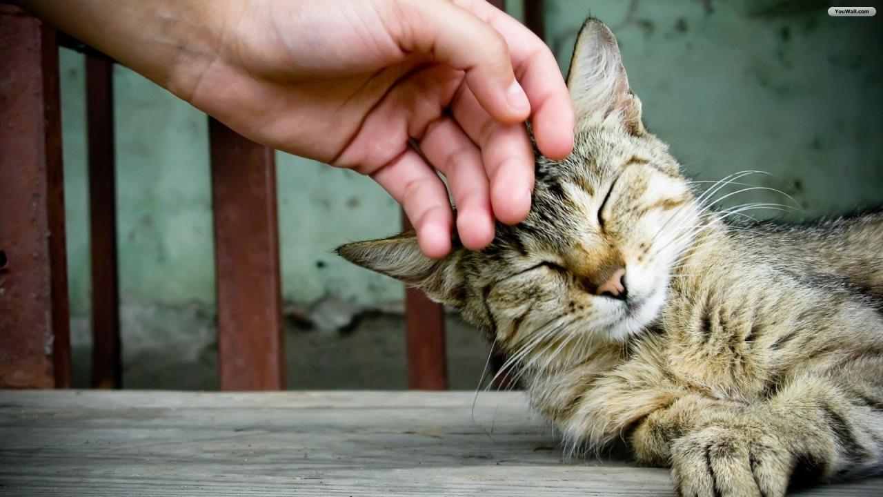 Petting cat - Clínica abre vaga de emprego para interessados em fazer carinho em gatos