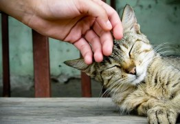 Clínica abre vaga de emprego para interessados em fazer carinho em gatos