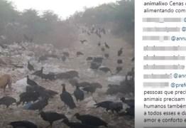 Moradores denunciam maus-tratos e morte de animais em lixão de Monteiro