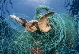 ONU determina registro de itens de pesca para diminuir mortes de animais marinhos