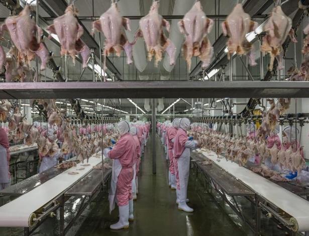 SUPERBACTÉRIAS: Como o uso de antibióticos na criação de aves está contaminando o homem