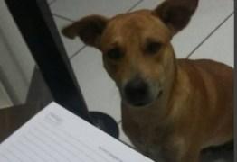 CRUELDADE: Cachorro é esfaqueado e queimado, no interior da Paraíba