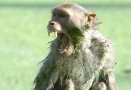 MORDIDA NA CABEÇA: macaco rouba e mata bebê de 12 dias