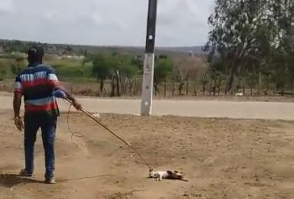 ESPANCAMENTO GATO - 'Existem coisas muito mais graves na delegacia e a sociedade não se preocupa', diz delegado que investiga agressão a um gato em Itabaiana