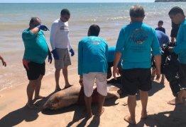 Golfinho encontrado morto na capital