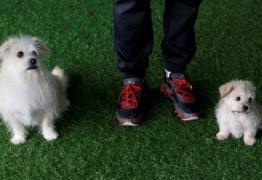 Primeiro serviço de clonagem da China duplica famoso cão do cinema