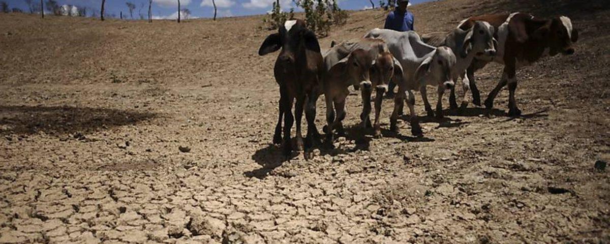 seca 1 1200x480 - SECA: Governo Federal reconhece situação de emergência devido a estiagem em 177 municípios paraibanos