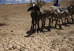Agricultor de Santa Luzia deixa produção convencional para vender vento