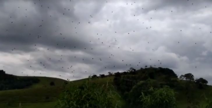 Capturarçl - 'Chuva de aranhas' assusta moradores no sul de Minas - VEJA VÍDEO