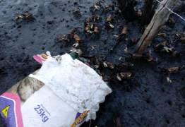 Mais de 400 caranguejos são devolvidos ao mangue na PB pelo Ibama