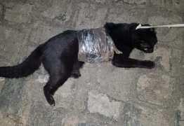 GATA FOI APREENDIDA: Bichana é flagrada tentando entrar no Serrotão com drogas e carregadores de celular