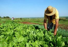 MPF quer punição para mercado ilegal de lotes da reforma agrária em assentamento na Paraíba