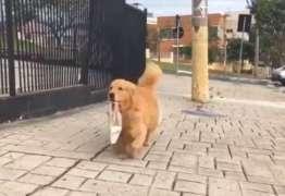 Conheça a cadela que vai buscar pão 'sozinha' na padaria