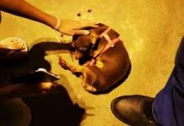 Funcionário público aposentado é preso após jogar cachorro de prédio
