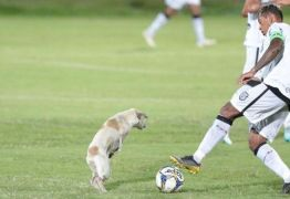 Cachorro invade jogo da Série C e dribla jogadores de Treze e Santa Cruz – VEJA VÍDEO
