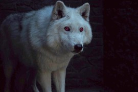 AAB5WYm - Game of Thrones dobrou número de huskies siberianos abandonados