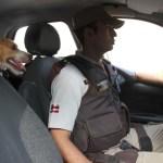 barrito3 - MELHOR AMIGO DA LEI: Cão é adotado por policiais e faz rondas junto com a tropa