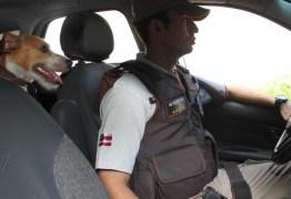 MELHOR AMIGO DA LEI: Cão é adotado por policiais e faz rondas junto com a tropa