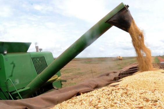 graos editada 300x200 - IBGE prevê safra de grãos 2,2% maior neste ano
