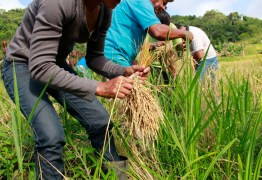Governo comemora abertura do mercado mexicano para o arroz brasileiro
