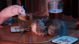 xblog rats sf.jpg.pagespeed.ic .MVTs xBWrq 300x169 - EXÓTICO: Bar permite que ratos passeiem livremente e tomem bebidas