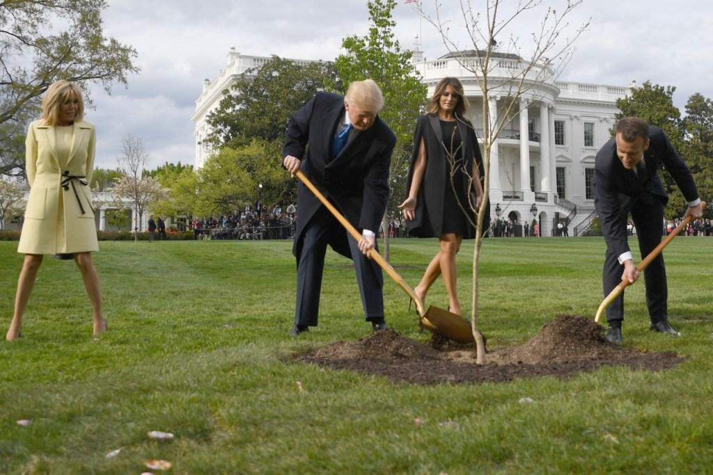 000 1he00k 1024x683 - Árvore plantada por Trump e Macron como sinal de amizade morreu