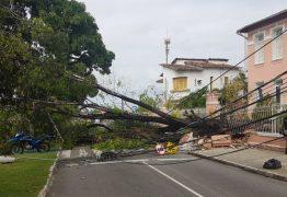 Árvore cai sobre carro no Centro de João Pessoa; trânsito interrompido