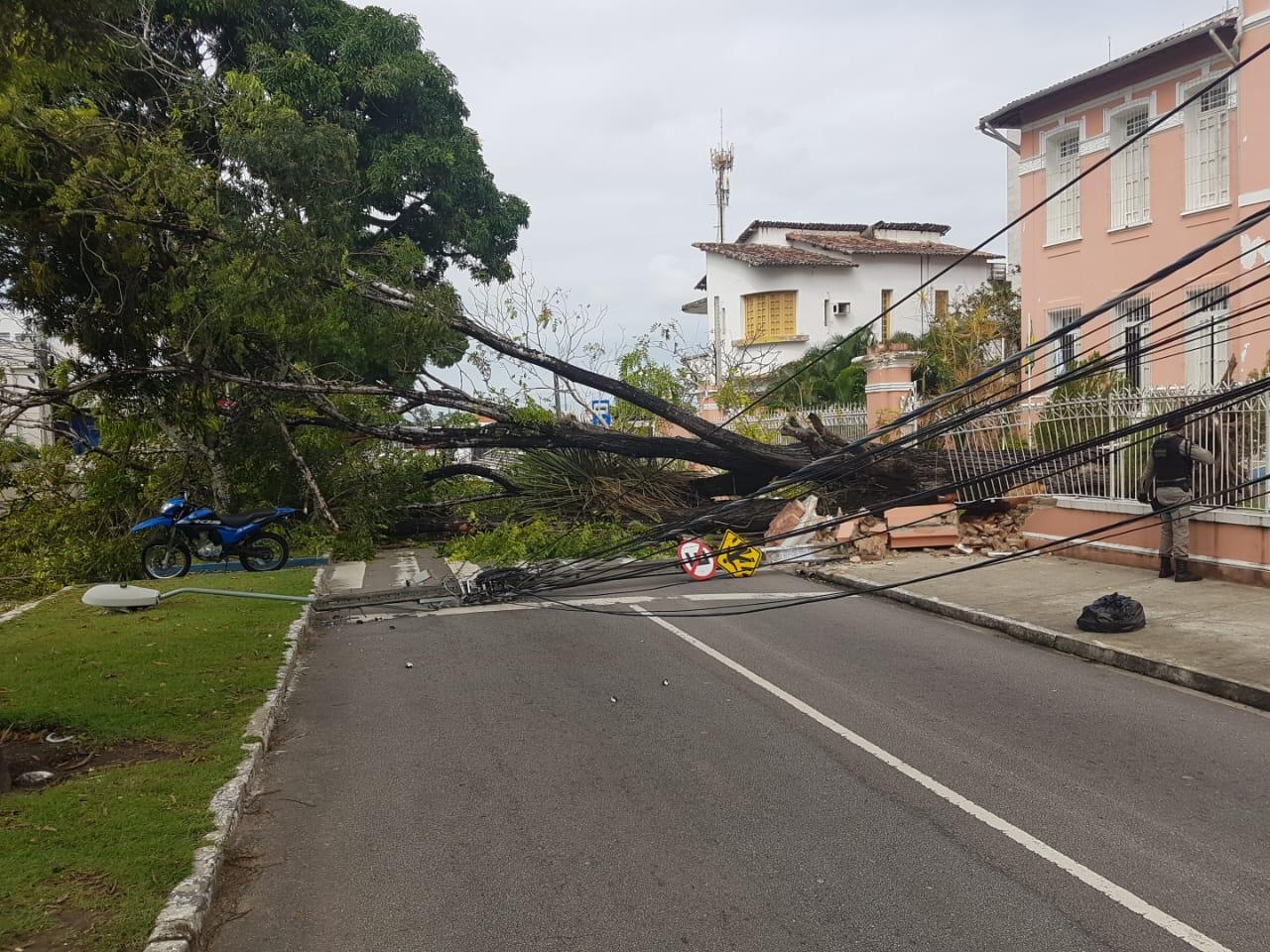 WhatsApp Image 2019 06 21 at 13.42.33 - Árvore cai sobre carro no Centro de João Pessoa; trânsito interrompido