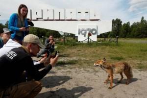 acidente nuclear em chernobyl 6 300x200 - 33 anos depois do acidente nuclear, veja como está Chernobyl na vida real