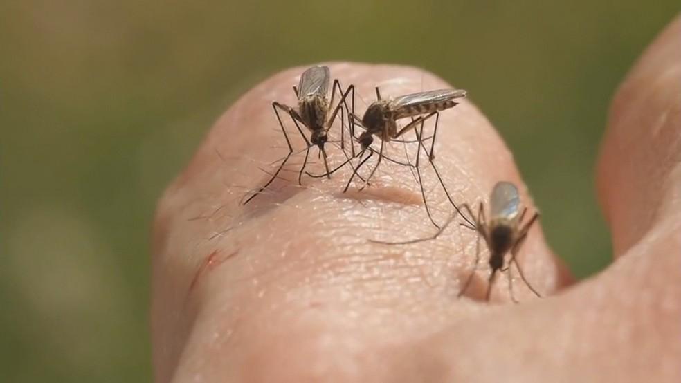 bda malaria - Mesmo com feriado prolongado, prefeitura afirma que ações de combate à malaria continuam no Conde