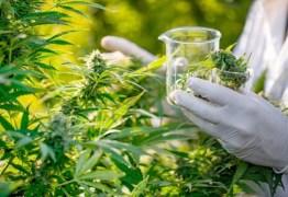 CAMPINA GRANDE: Justiça condena homem a seis anos e quatro meses de reclusão por tráfico de drogas