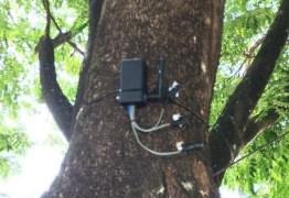 Pesquisador da UFPB cria árvore inteligente capaz de evitar incêndios florestais
